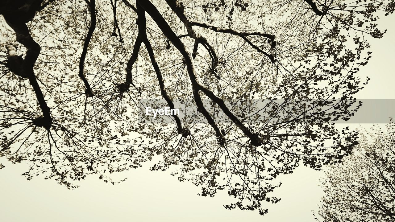 tree, branch, nature, beauty in nature, growth, low angle view, blossom, flower, no people, outdoors, tranquility, day, springtime, fragility, sky, scenics, clear sky, backgrounds, freshness, close-up