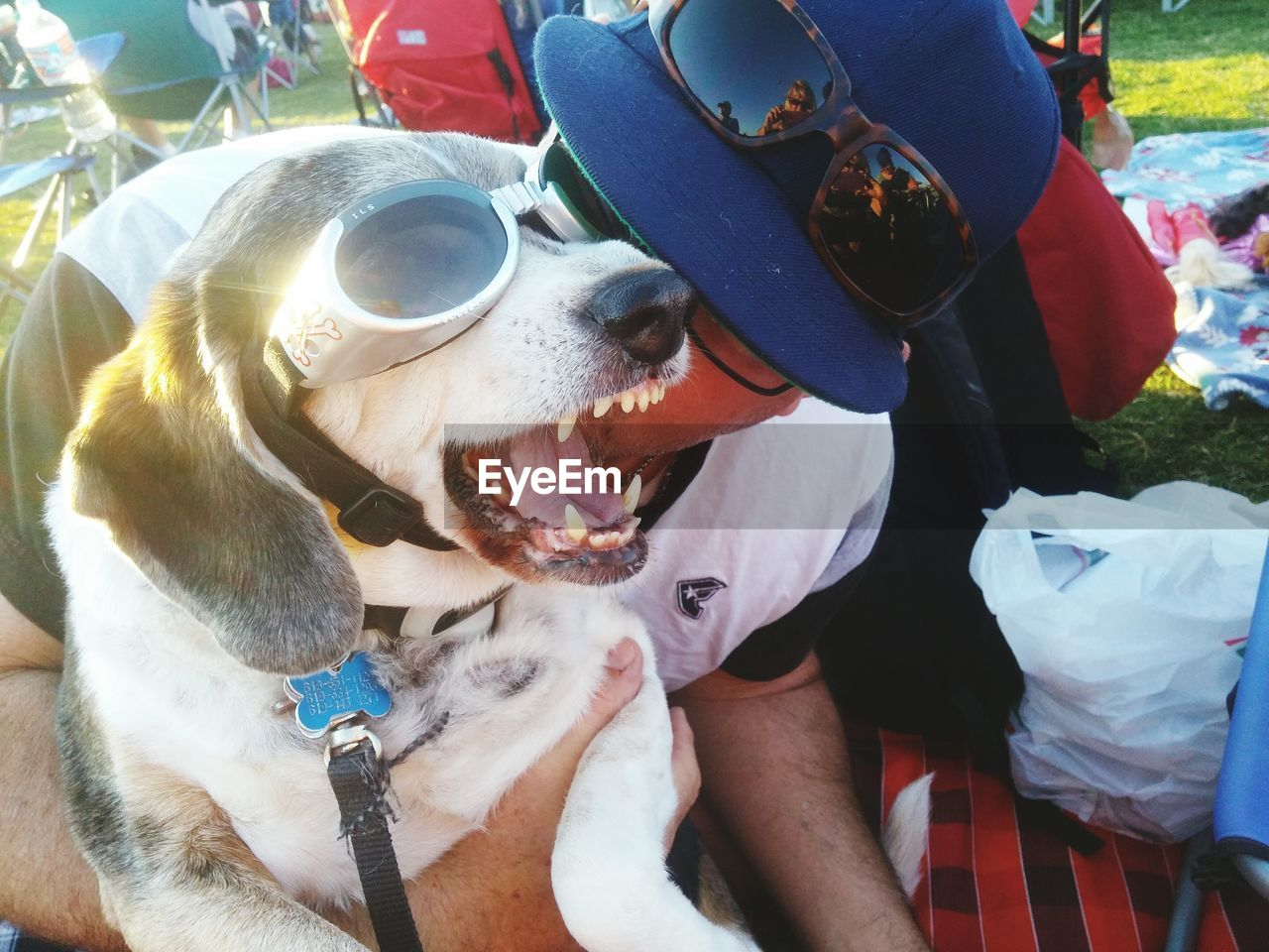 dog, pets, one animal, real people, domestic animals, animal themes, day, outdoors, one person, mammal, bonding, human hand, close-up, people