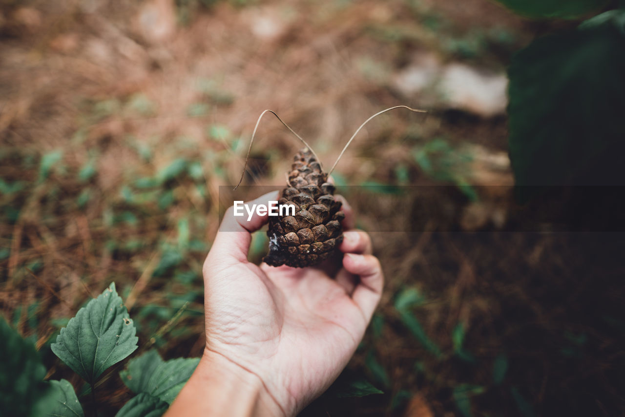 human hand, hand, holding, human body part, real people, one person, focus on foreground, nature, close-up, personal perspective, plant, unrecognizable person, day, land, one animal, field, growth, animal wildlife, outdoors, finger, human limb, butterfly - insect