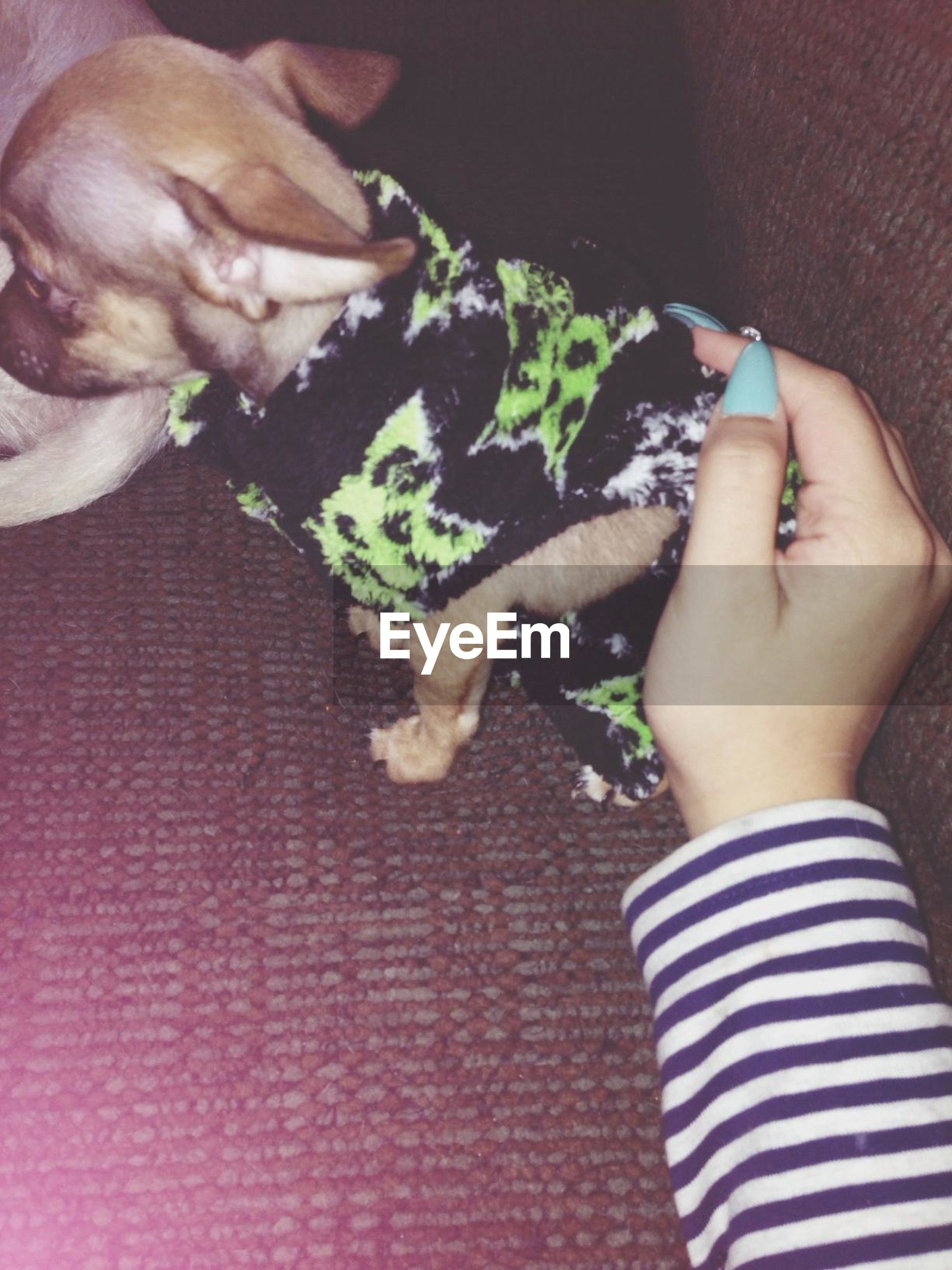 person, pets, domestic animals, indoors, mammal, high angle view, animal themes, part of, dog, one animal, cropped, unrecognizable person, holding, personal perspective, low section, lifestyles