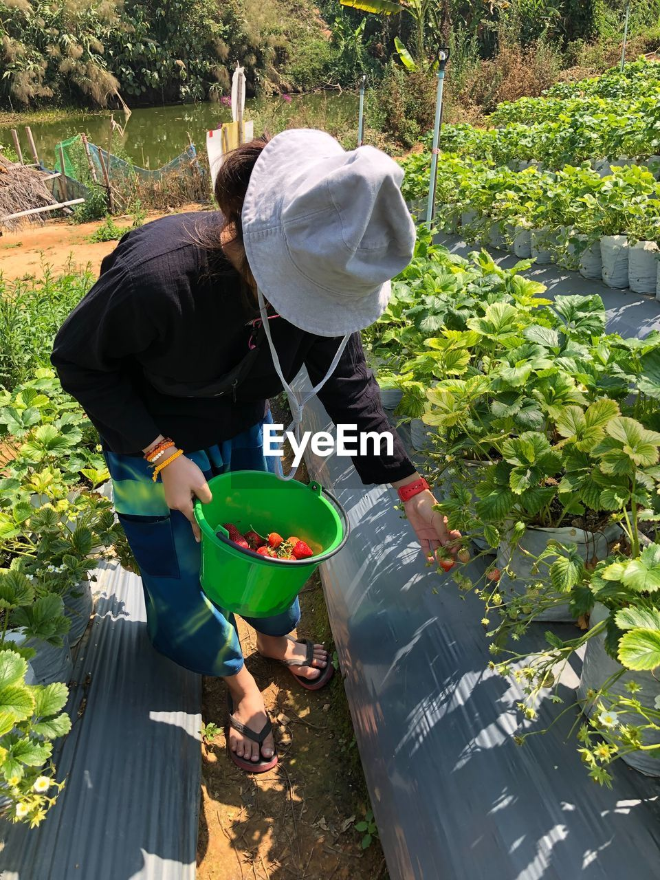 REAR VIEW OF WOMAN WORKING AT PLANTS