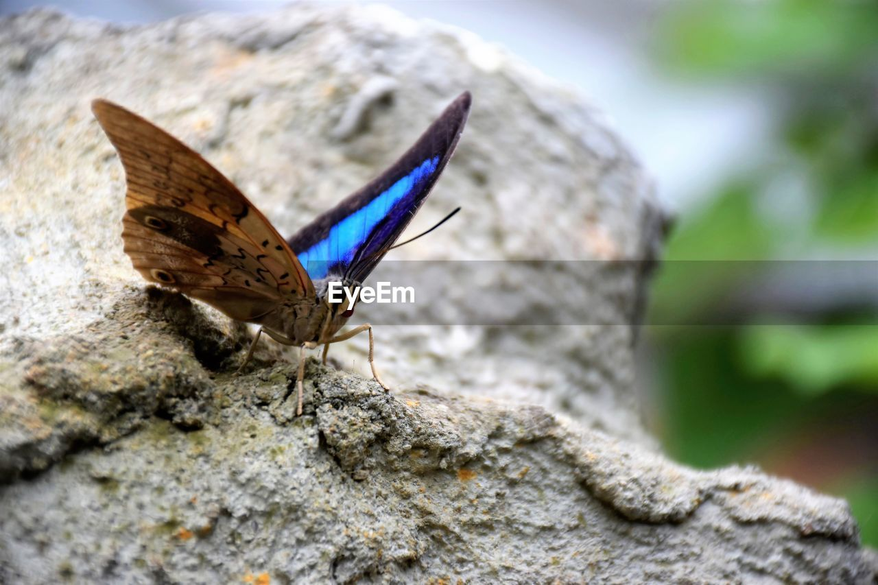 invertebrate, animal themes, animal wildlife, insect, animal wing, animal, one animal, animals in the wild, butterfly - insect, day, solid, close-up, no people, nature, rock, rock - object, beauty in nature, focus on foreground, selective focus, butterfly, outdoors