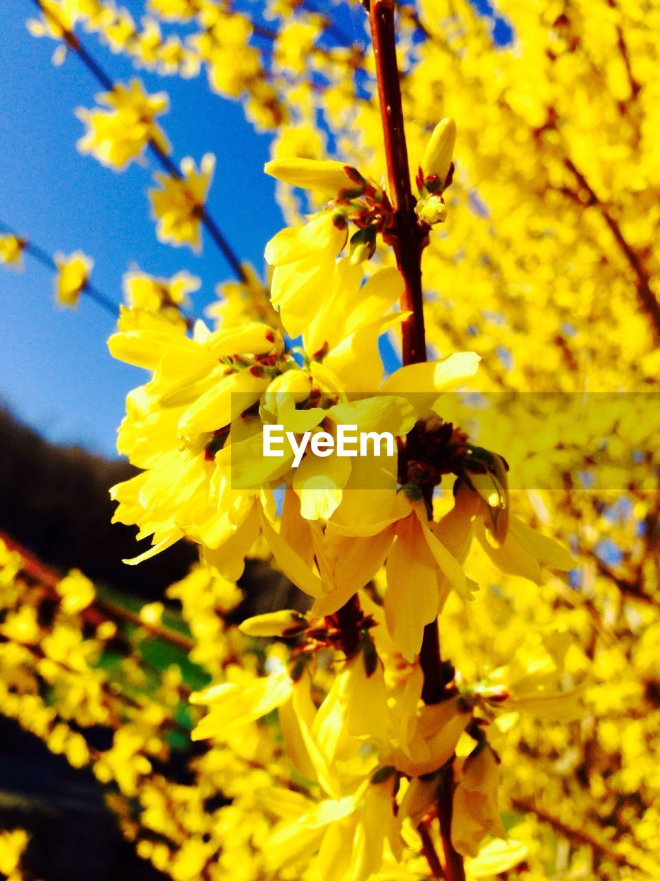 Yellow flowers growing on tree