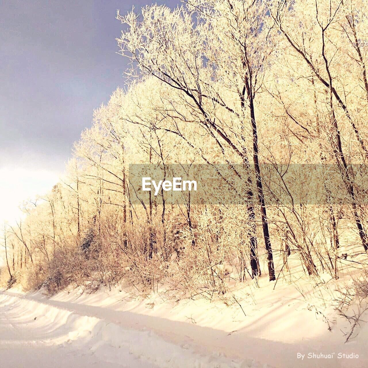 snow, tree, nature, winter, bare tree, cold temperature, beauty in nature, no people, tranquility, day, outdoors, sunlight, branch, sky, landscape