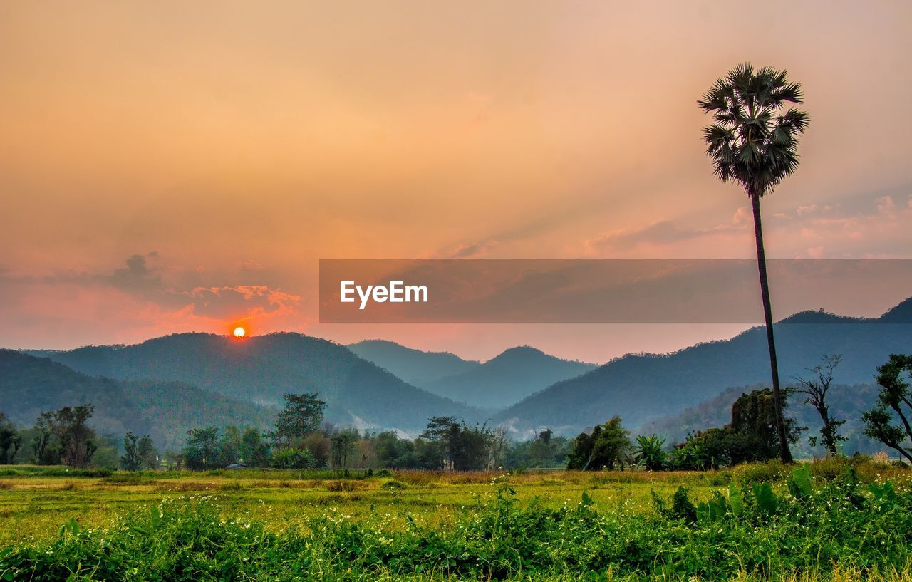 beauty in nature, sky, scenics - nature, landscape, environment, sunset, tranquil scene, mountain, tranquility, plant, tree, cloud - sky, growth, field, nature, land, idyllic, no people, palm tree, orange color, mountain range, outdoors, coconut palm tree