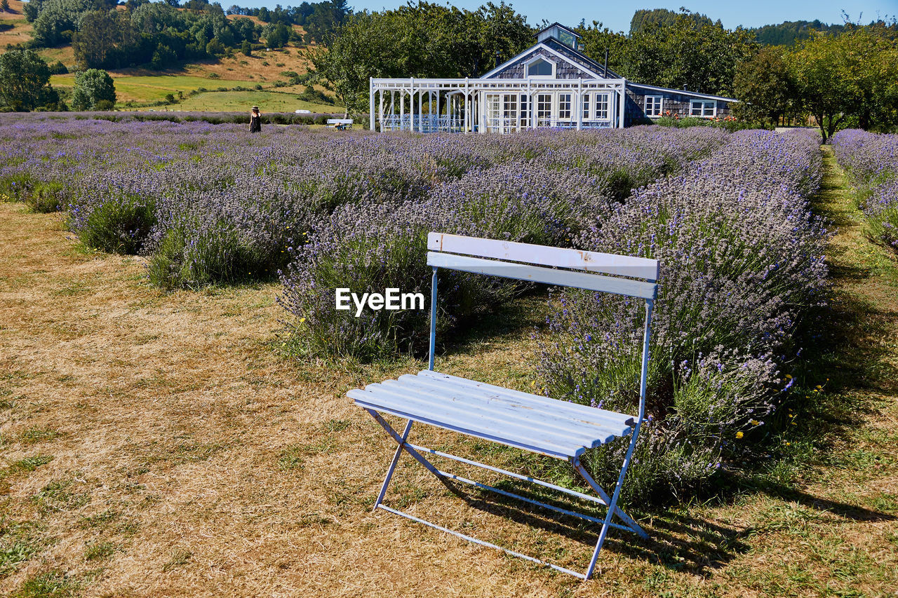 plant, seat, built structure, architecture, nature, chair, building exterior, grass, no people, front or back yard, bench, day, growth, building, field, land, house, outdoors, tree, empty, purple, park bench