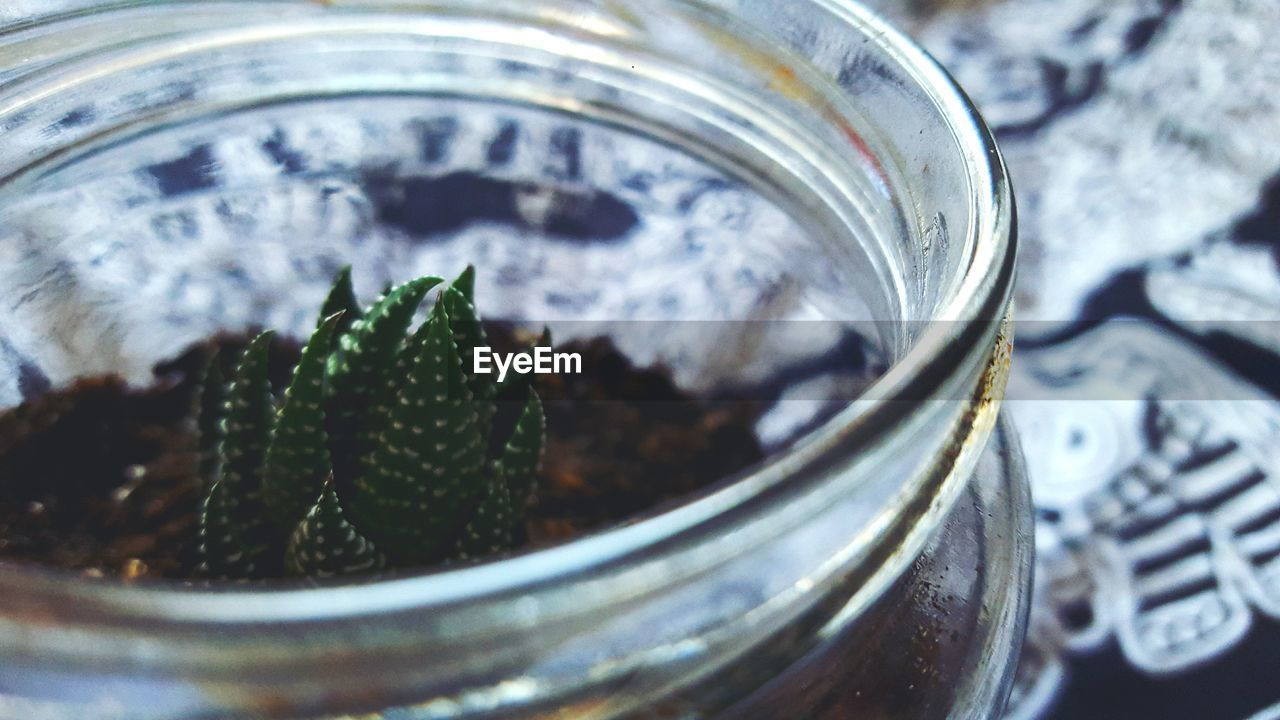 Close-Up Of Cactus Growing In Jar On Table