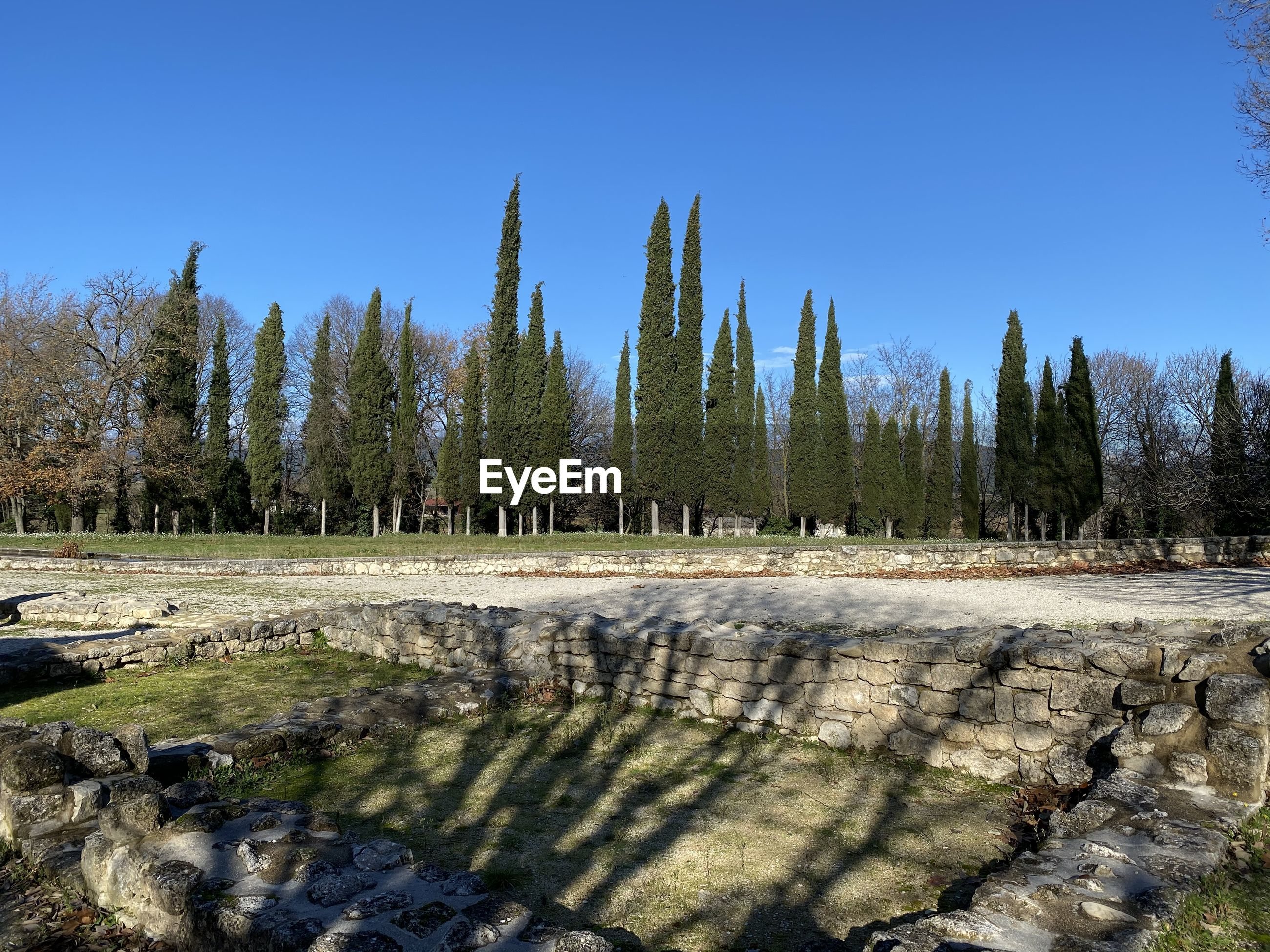 PANORAMIC SHOT OF TREES AGAINST CLEAR SKY