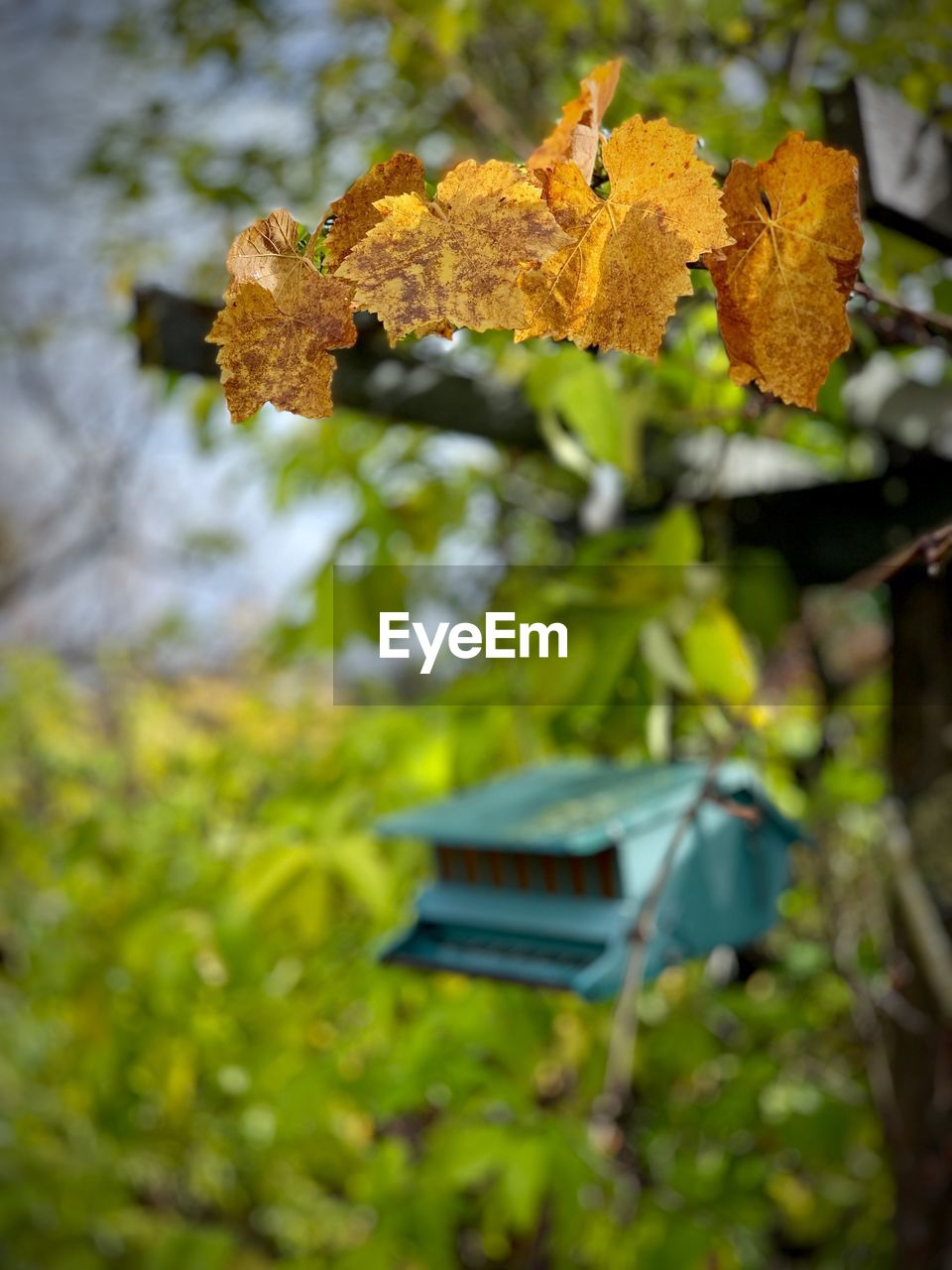 leaf, plant part, plant, nature, growth, tree, day, autumn, no people, selective focus, change, beauty in nature, outdoors, green color, food, close-up, food and drink, focus on foreground, land, field, leaves