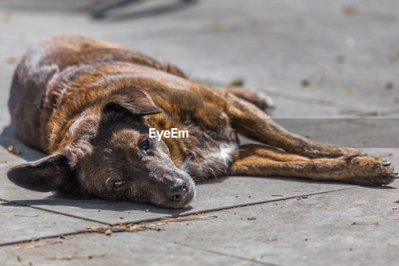 Close-Up Of Dog Sleeping Outdoors