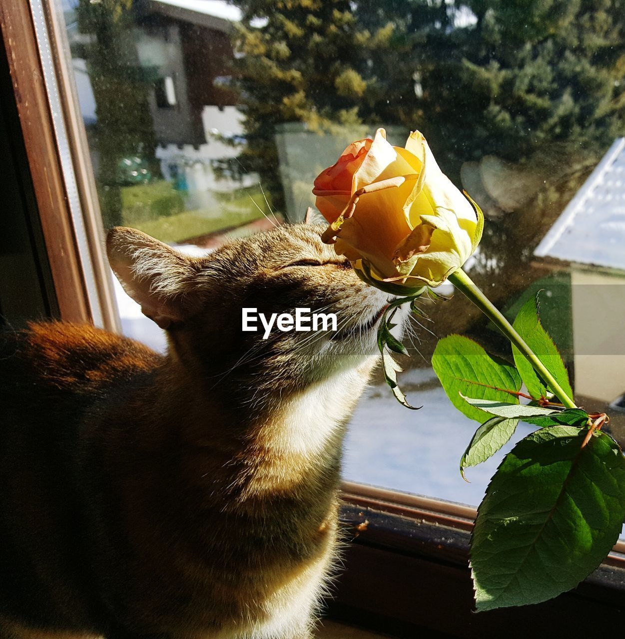CLOSE-UP OF CAT BY WINDOW IN FLOWER