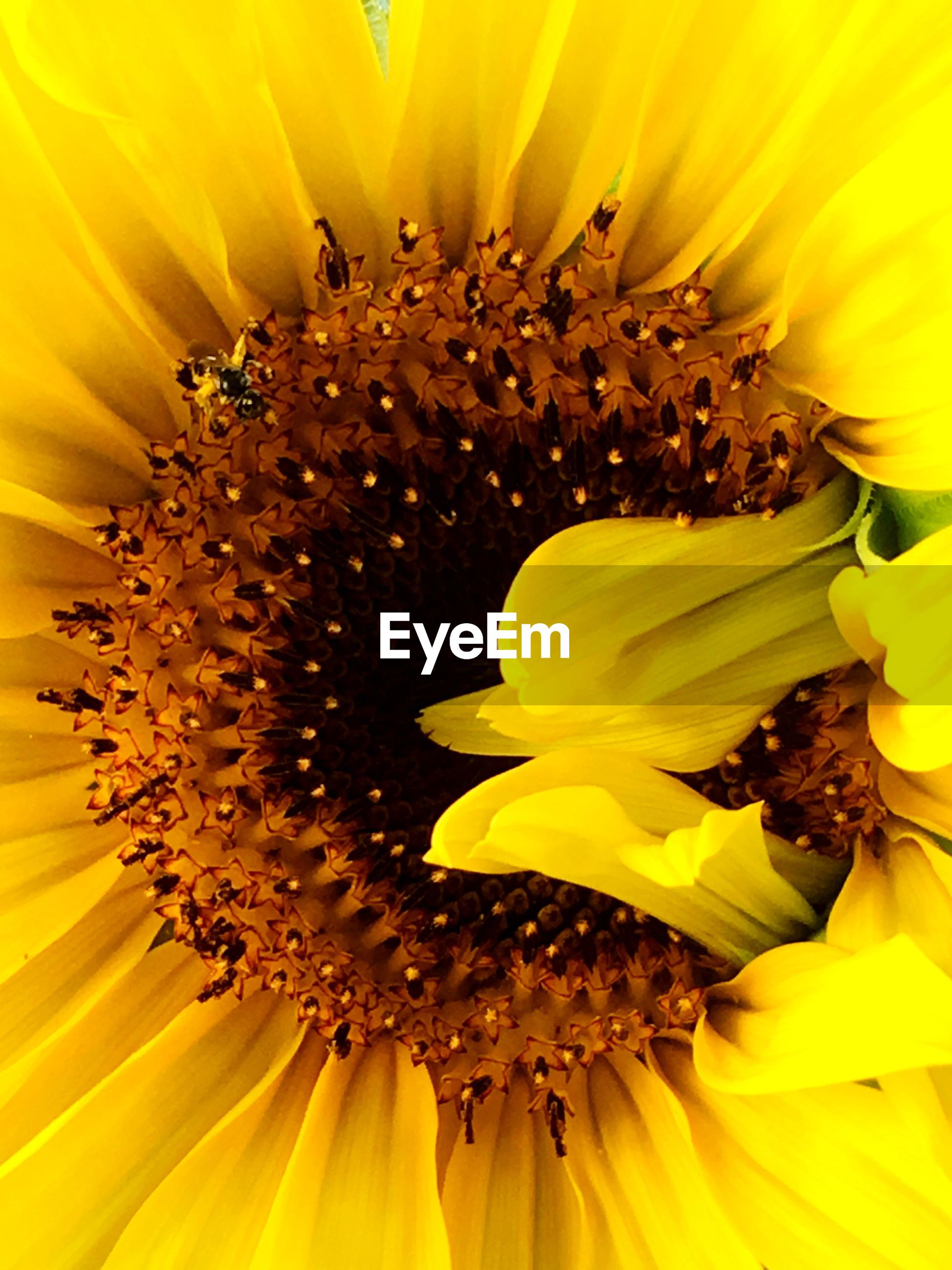yellow, flower head, flower, petal, freshness, fragility, beauty in nature, close-up, backgrounds, macro, blossom, vibrant color, springtime, single flower, extreme close-up, full frame, stamen, nature, growth, elegance, selective focus, in bloom, season, detail, botany, pollen, sunflower, softness, exoticism, bloom, soft focus, pistil, design, extreme close up, exotic, day