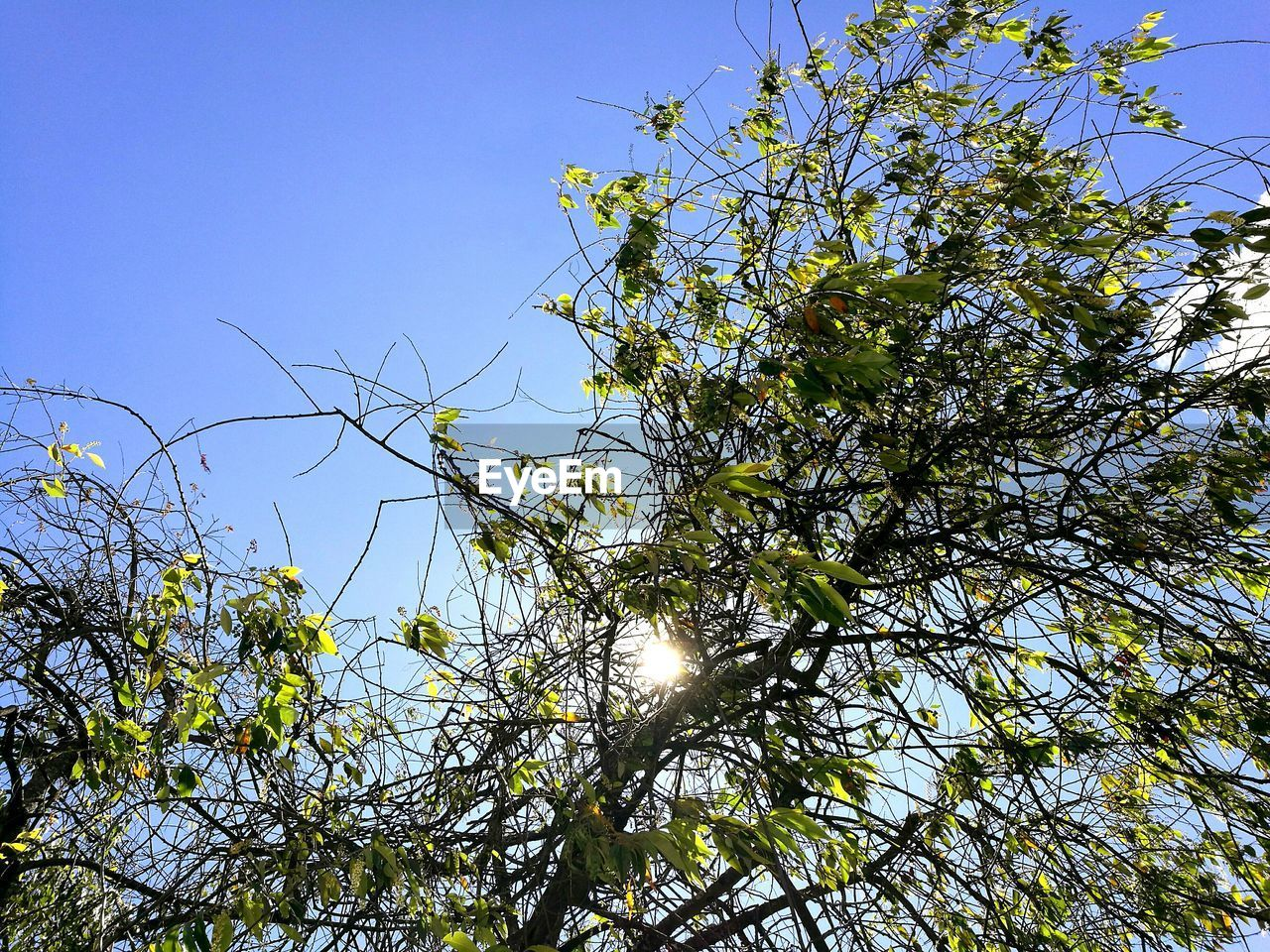 LOW ANGLE VIEW OF TREE AGAINST THE SKY
