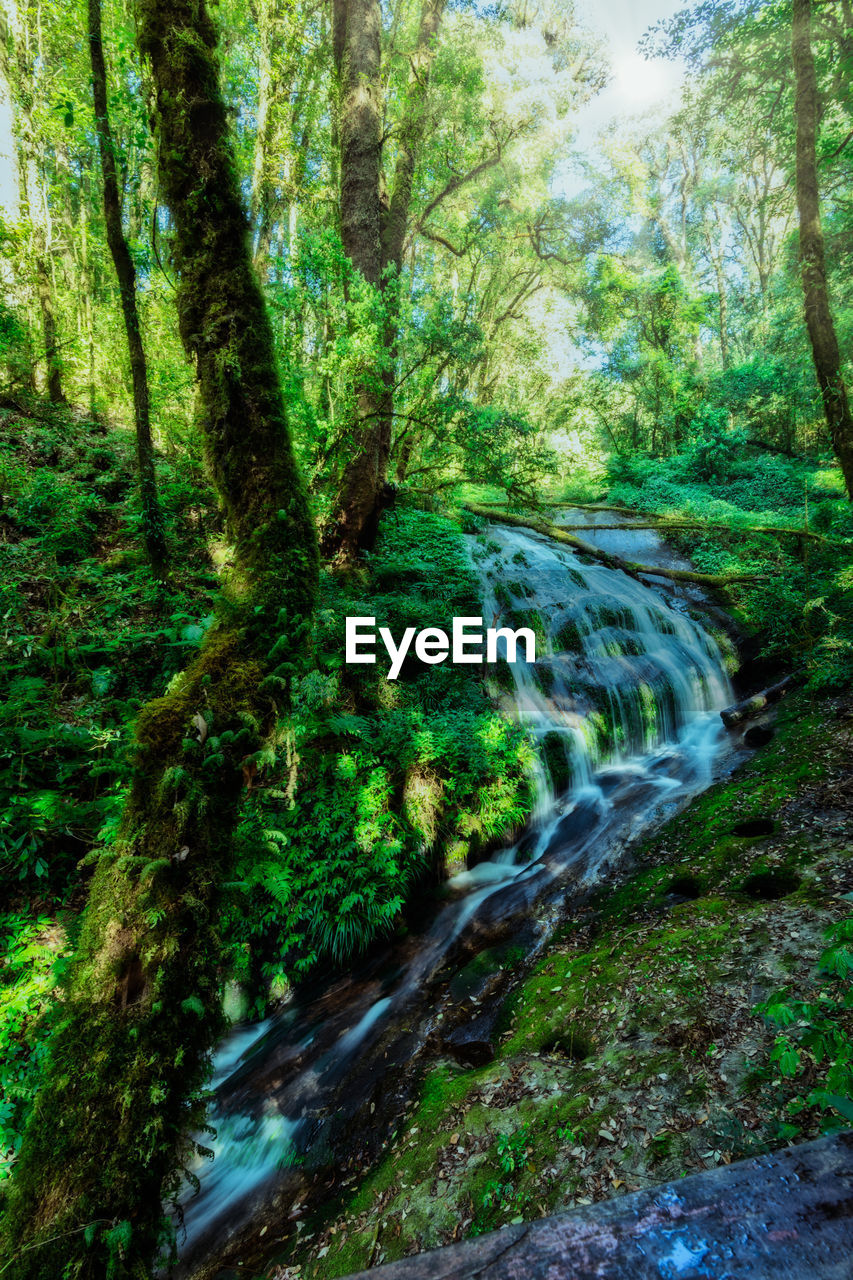 tree, forest, plant, land, scenics - nature, beauty in nature, nature, growth, tranquility, day, no people, green color, tranquil scene, non-urban scene, woodland, environment, motion, moss, outdoors, blurred motion, flowing water, flowing, stream - flowing water, rainforest