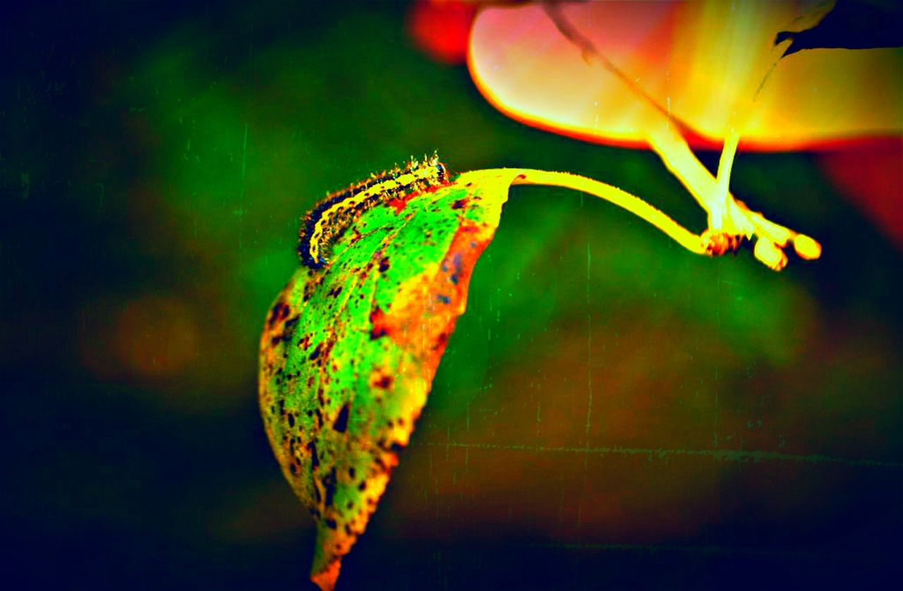 one animal, animal themes, animals in the wild, close-up, nature, green color, animal wildlife, insect, beauty in nature, no people, leaf, outdoors, plant, night, fragility, flower, slug, undersea, freshness