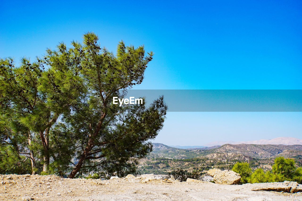sky, tree, plant, blue, tranquility, tranquil scene, beauty in nature, scenics - nature, clear sky, growth, nature, day, land, no people, non-urban scene, landscape, environment, sunlight, green color, outdoors