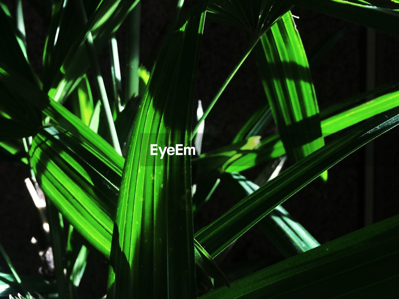 green color, growth, plant, nature, leaf, no people, close-up, day, palm tree, outdoors, beauty in nature, freshness, fragility