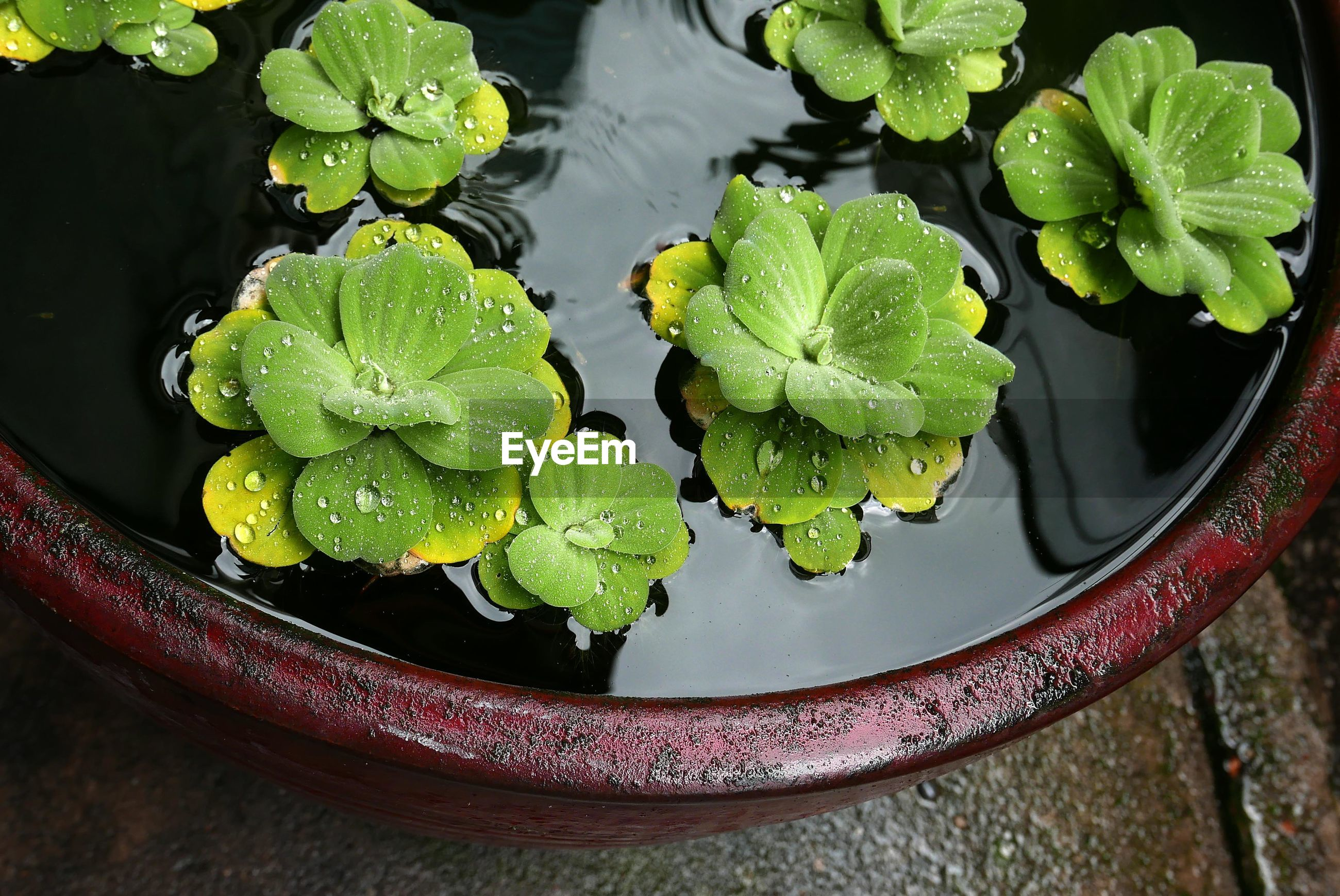High angle view of plants floating on water
