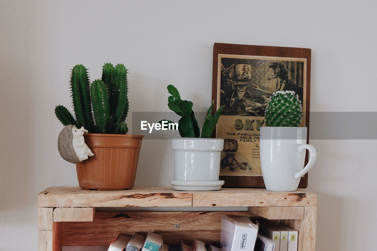 indoors, potted plant, plant, no people, wood - material, green color, table, growth, home interior, nature, wall - building feature, still life, cup, home, succulent plant, container, art and craft, representation, shelf, cactus, houseplant