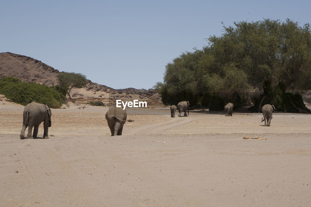 Elephants On Landscape Against Clear Sky During Sunny Day