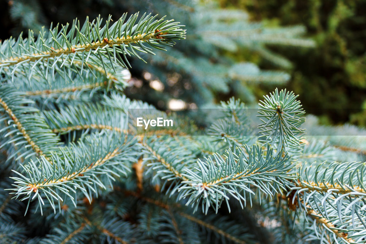 CLOSE-UP OF PINE TREE WITH PLANT