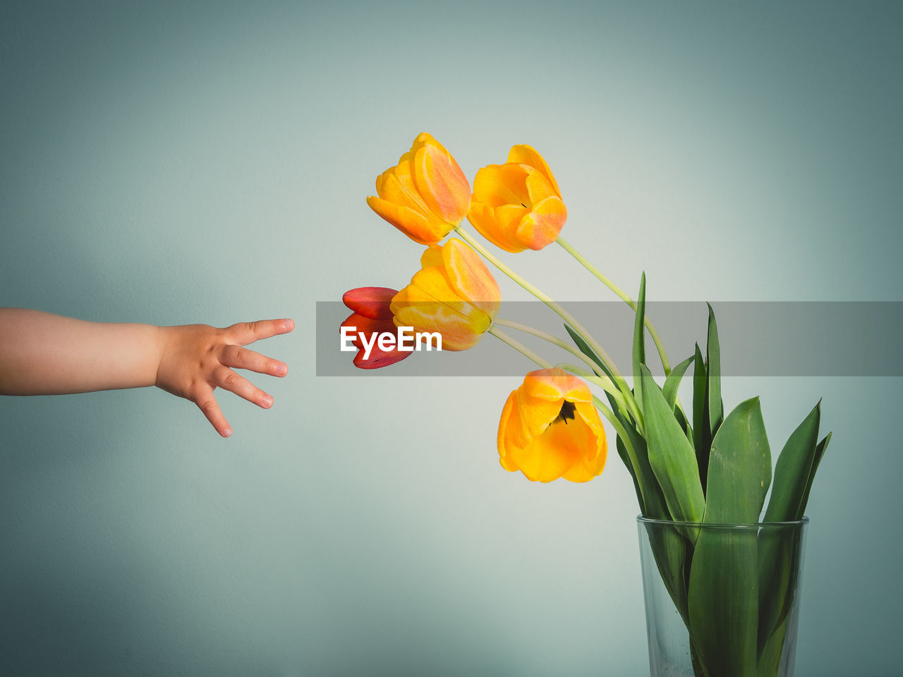 Cropped hand of child reaching towards tulips against green background
