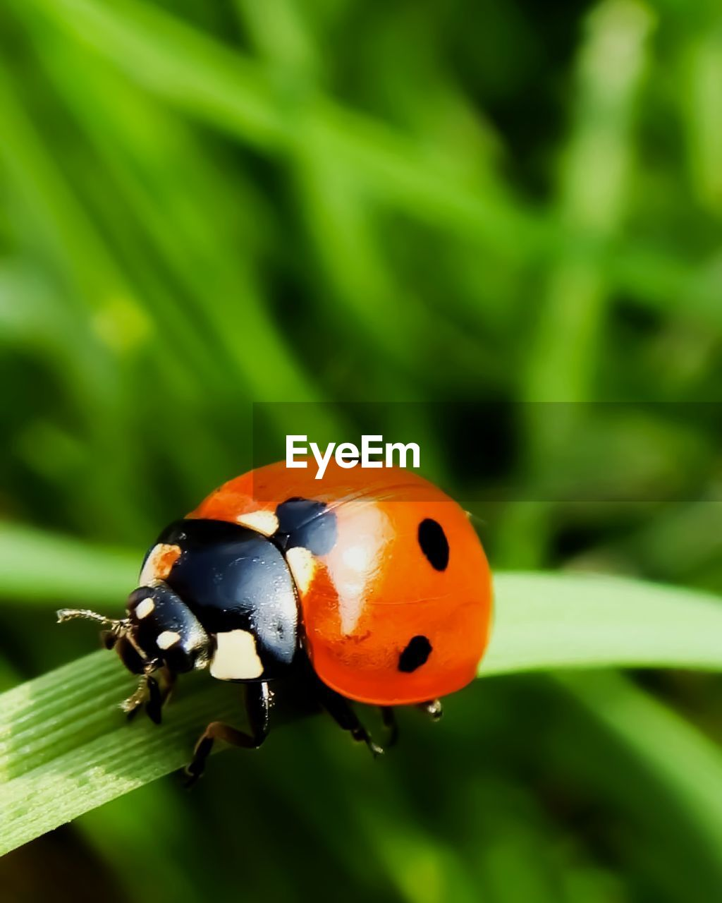 animal themes, animal wildlife, animals in the wild, animal, one animal, insect, invertebrate, ladybug, beetle, focus on foreground, close-up, no people, nature, orange color, day, green color, plant, spotted, outdoors, beauty in nature, small