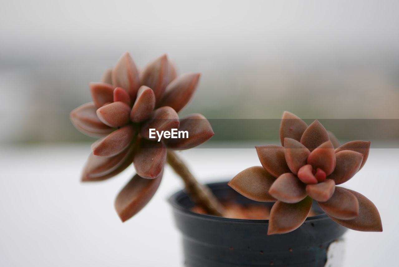 focus on foreground, close-up, plant, freshness, potted plant, growth, indoors, human hand, nature, day, food, food and drink, wellbeing, flower, selective focus, one person, holding