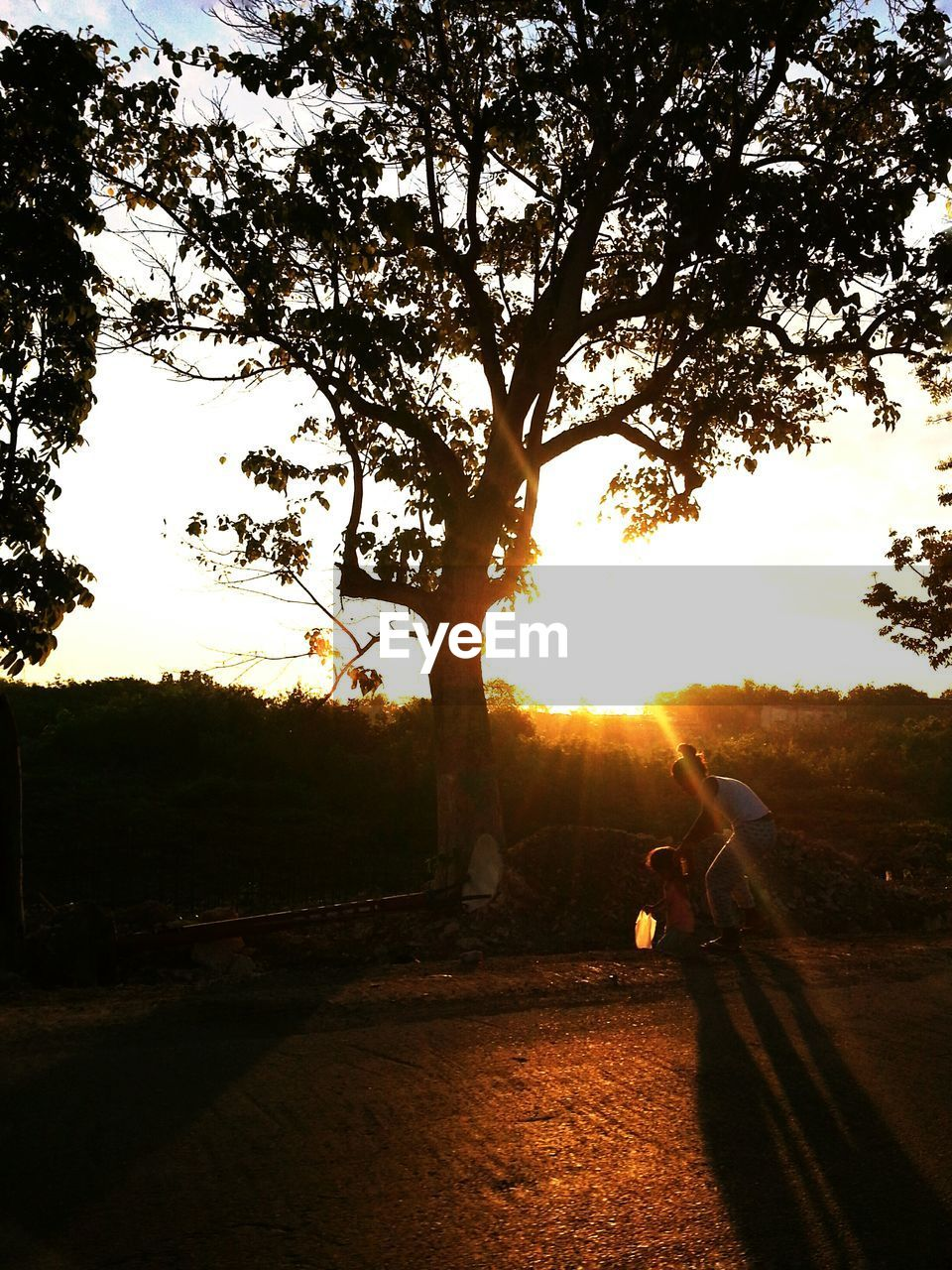 tree, silhouette, sunlight, sunset, outdoors, sky, sun, nature, real people, one person, branch, day, beauty in nature, people