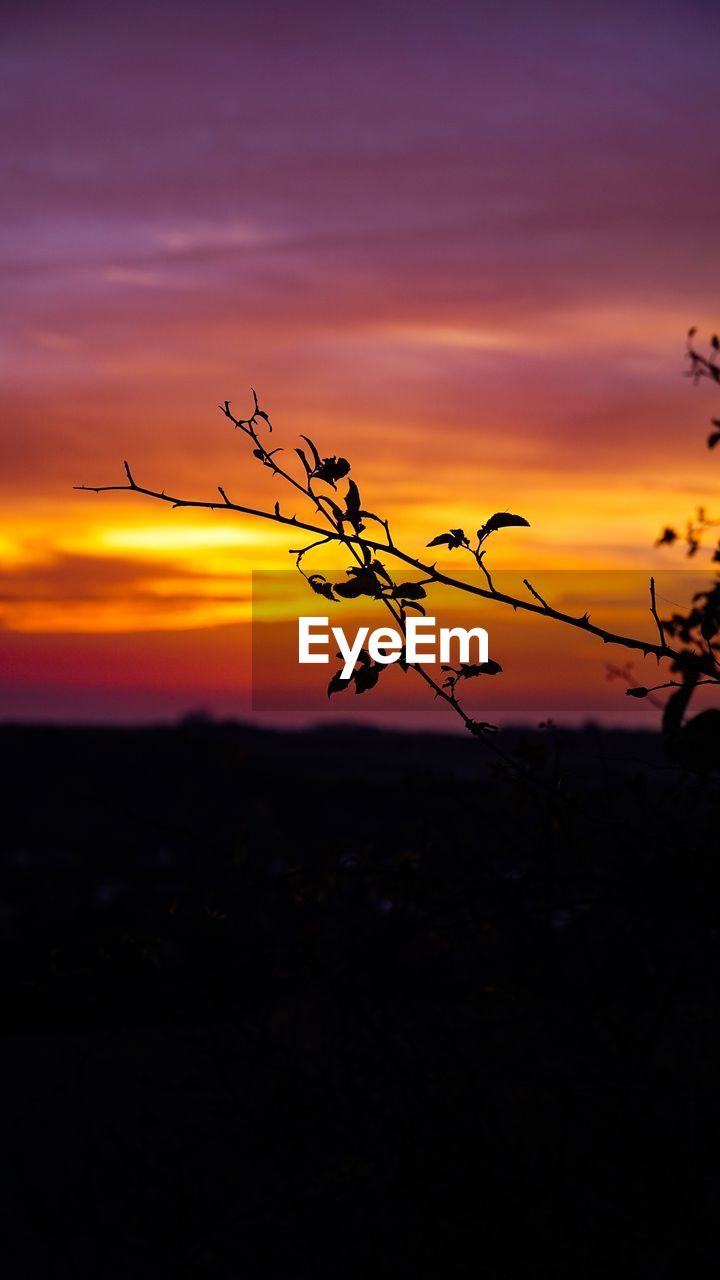 sunset, sky, beauty in nature, silhouette, orange color, cloud - sky, tranquility, scenics - nature, tranquil scene, nature, no people, plant, idyllic, outdoors, land, non-urban scene, growth, branch, environment, focus on foreground, romantic sky