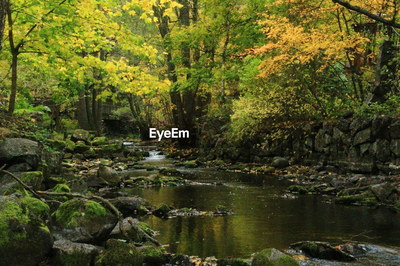 nature, tree, forest, water, tranquility, beauty in nature, river, scenics, growth, outdoors, tranquil scene, no people, landscape, day