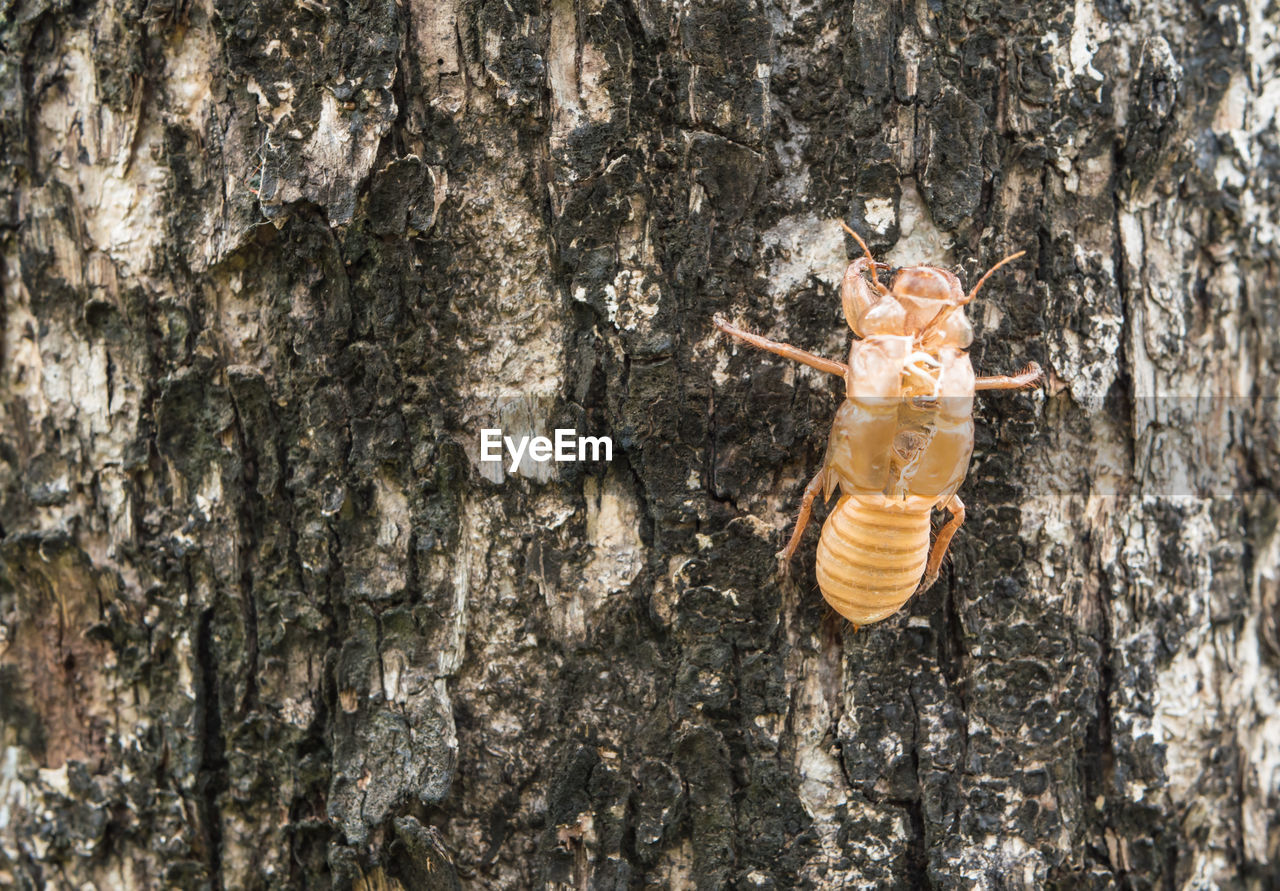 tree trunk, tree, no people, textured, insect, animal themes, animal wildlife, day, close-up, animals in the wild, hanging, nature, outdoors, full length