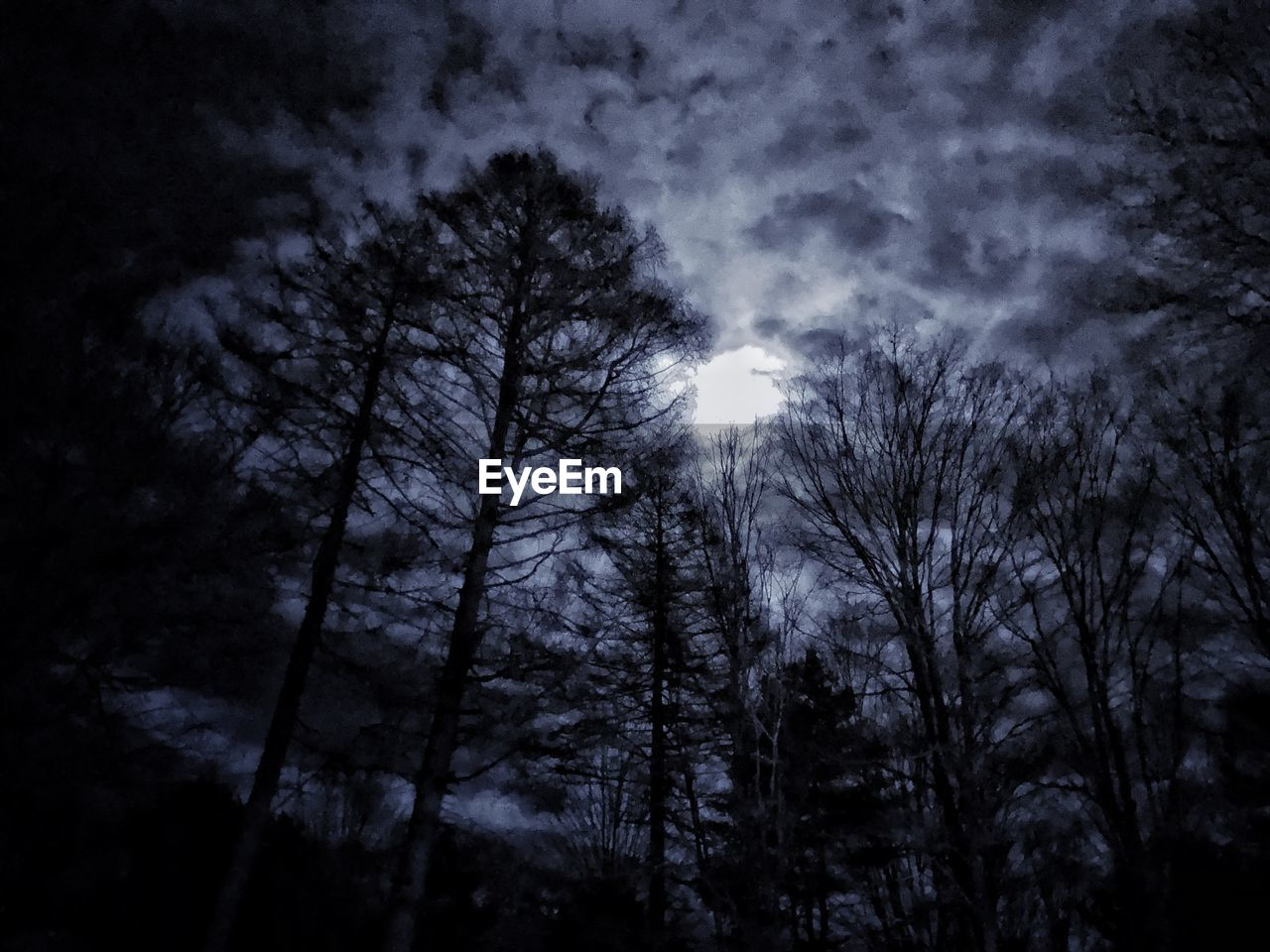 tree, sky, plant, low angle view, tranquility, beauty in nature, silhouette, nature, no people, scenics - nature, night, cloud - sky, forest, tranquil scene, moon, outdoors, bare tree, growth, land, dusk, dark, moonlight