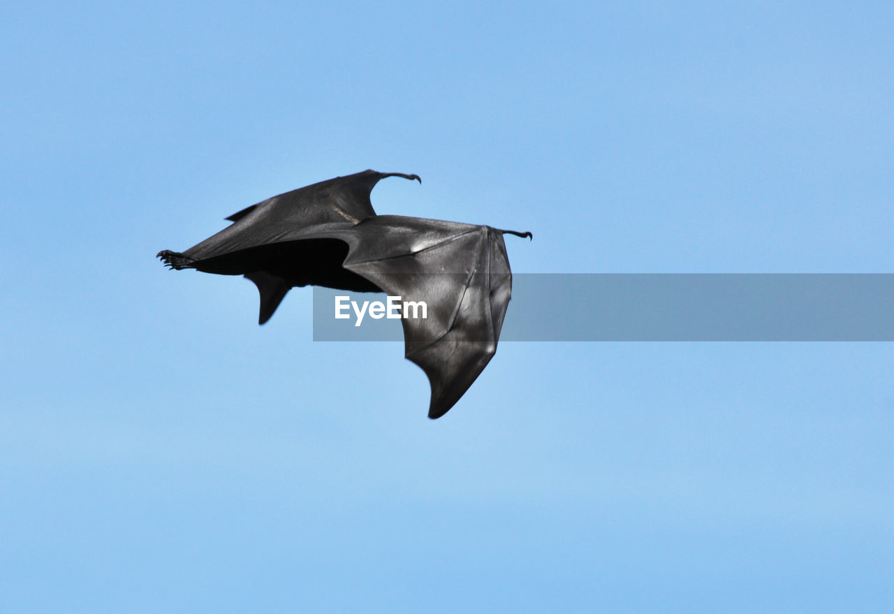 Low Angle View Of Flying Fox Against Sky