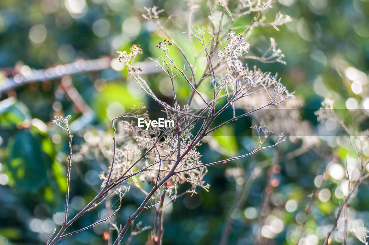 one animal, nature, day, focus on foreground, animal themes, animals in the wild, branch, no people, animal wildlife, outdoors, plant, close-up, tree, beauty in nature, perching, bird