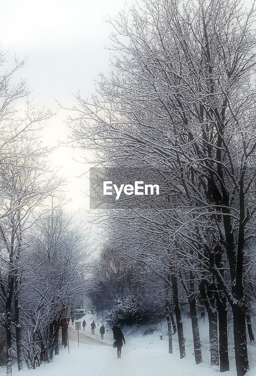 winter, snow, cold temperature, bare tree, tree, nature, weather, branch, beauty in nature, outdoors, day, frozen, tranquility, real people, snowing, sky