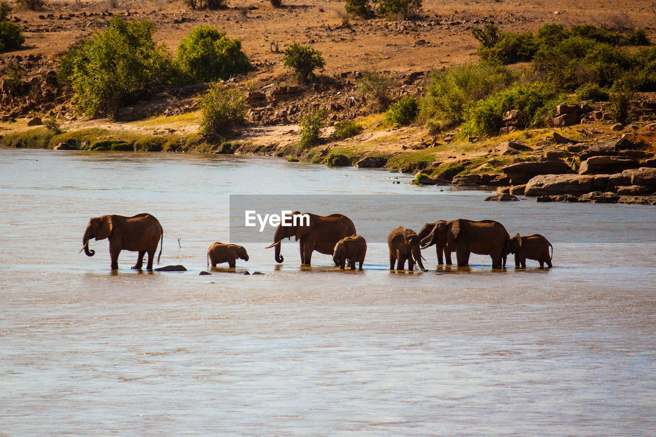 Elephants with calf in lake