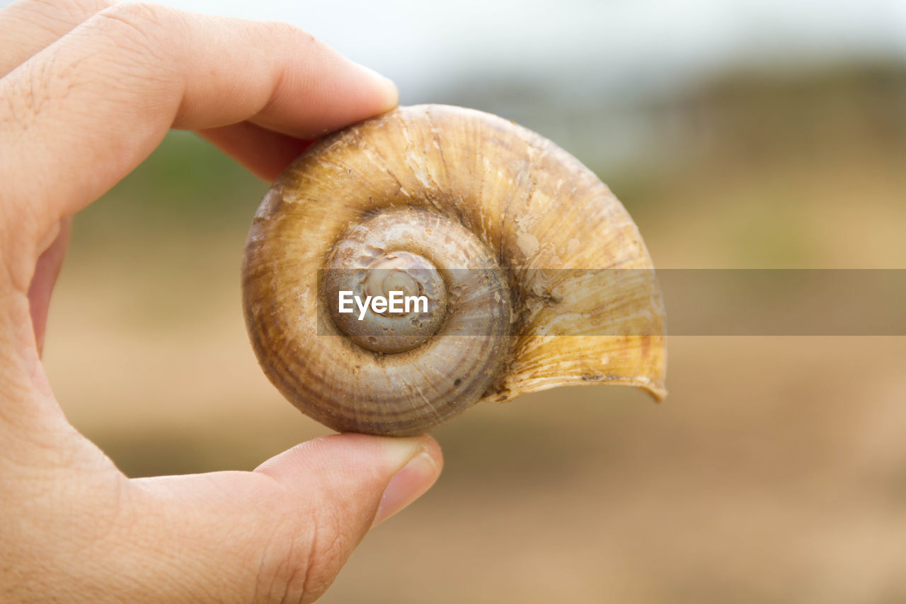 Cropped hand holding snail shell
