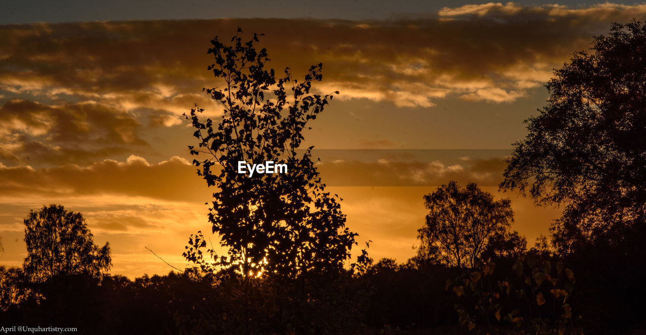 sunset, sky, plant, silhouette, tree, beauty in nature, cloud - sky, scenics - nature, orange color, tranquility, growth, nature, no people, tranquil scene, low angle view, non-urban scene, idyllic, outdoors, sunlight