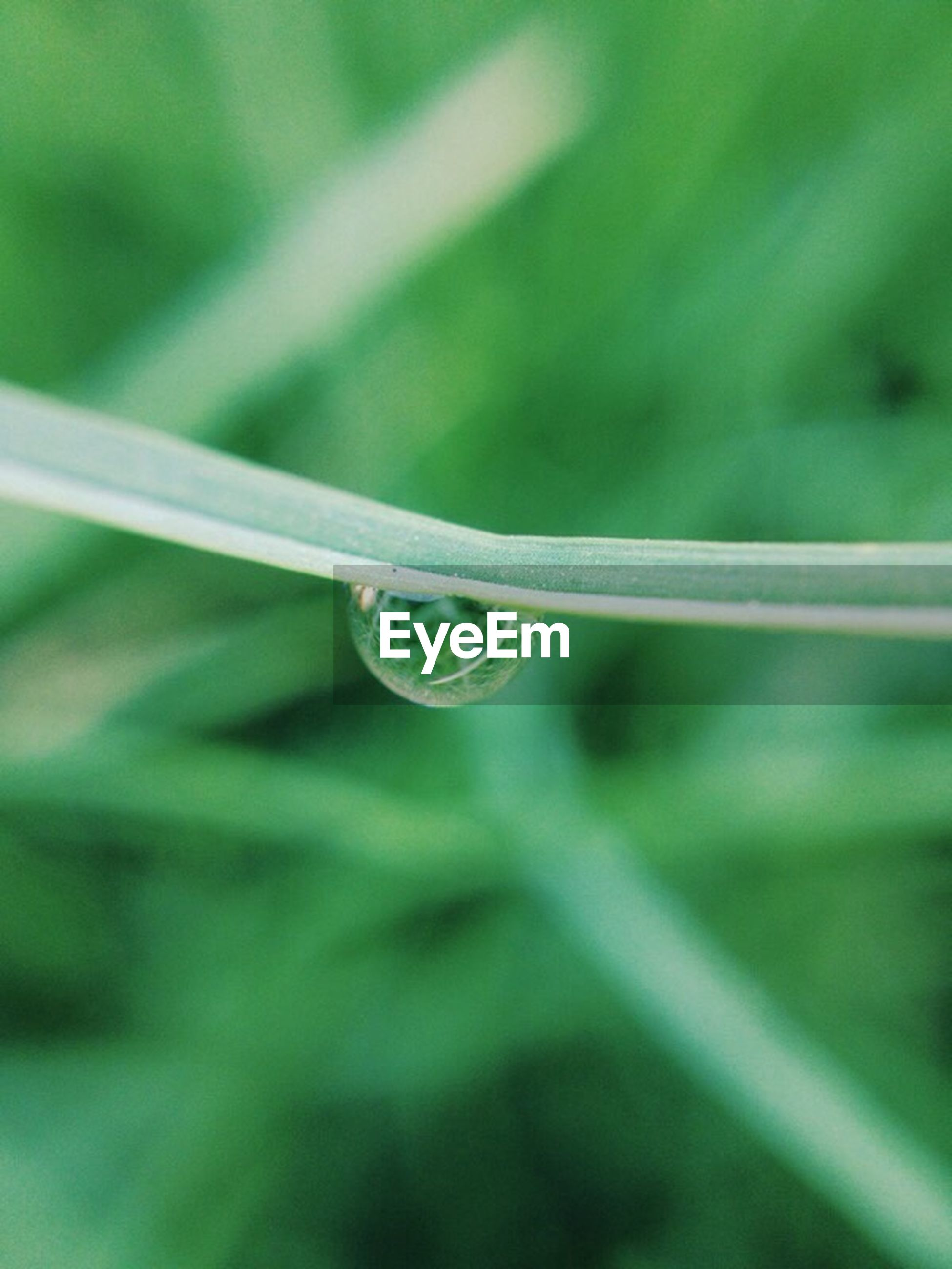 close-up, leaf, focus on foreground, drop, water, selective focus, green color, growth, freshness, fragility, nature, detail, plant, day, green, outdoors, blade of grass, beauty in nature, growing, tranquility, botany, no people