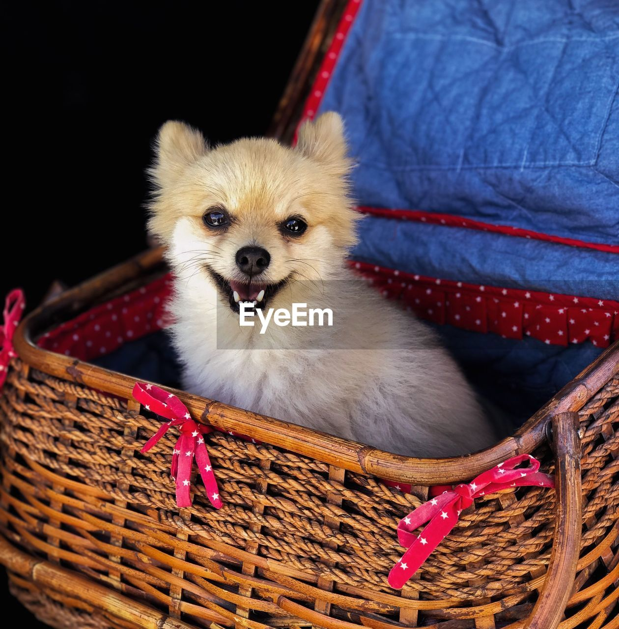 Portrait Of Dog In Basket