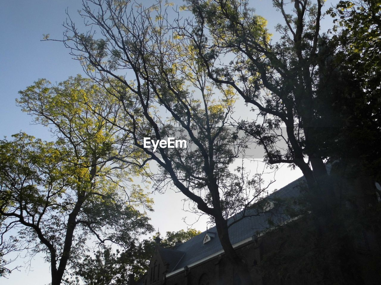 tree, low angle view, branch, no people, nature, growth, day, outdoors, sky, beauty in nature