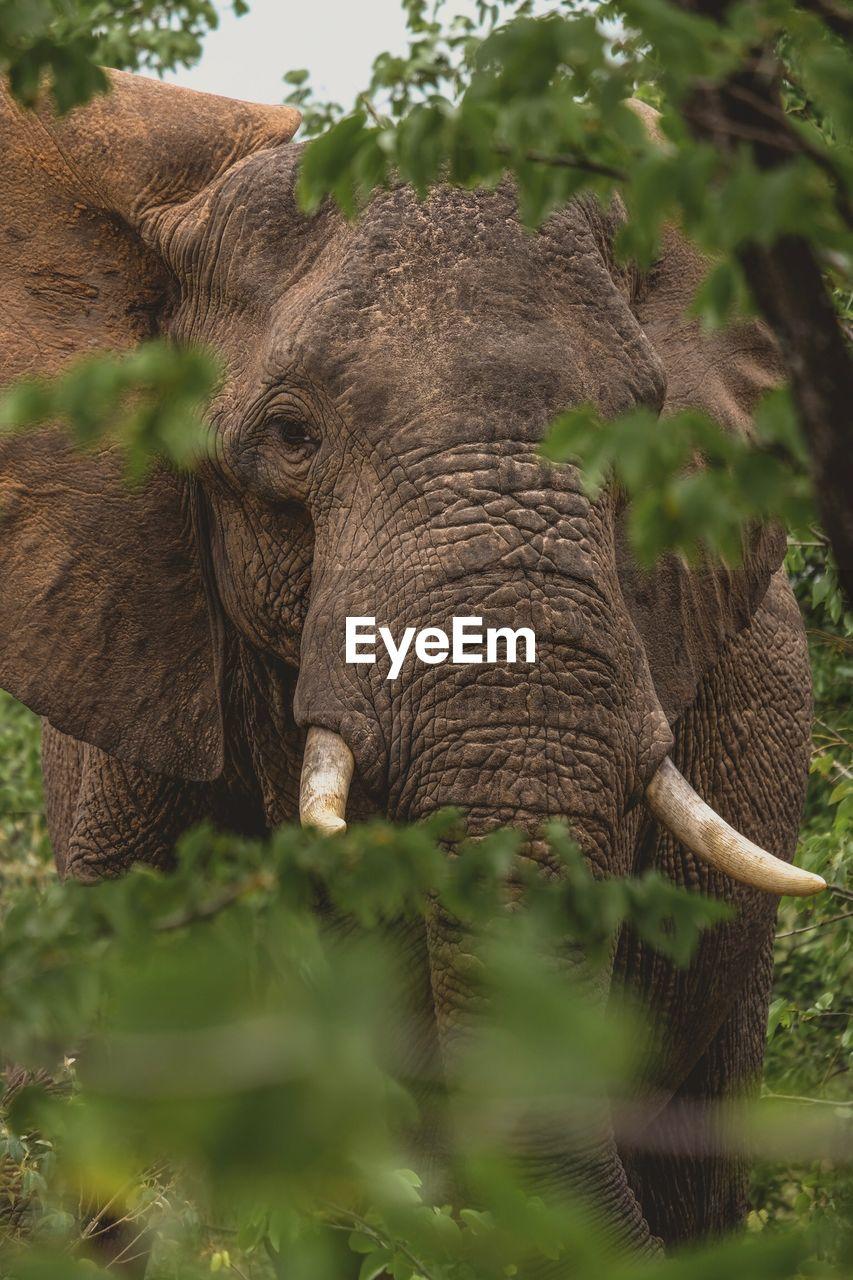 CLOSE-UP OF ELEPHANT ON PLANT