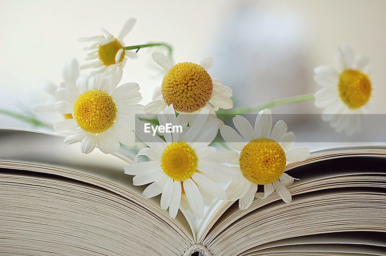 CLOSE-UP OF YELLOW FLOWERING PLANT IN BOOK