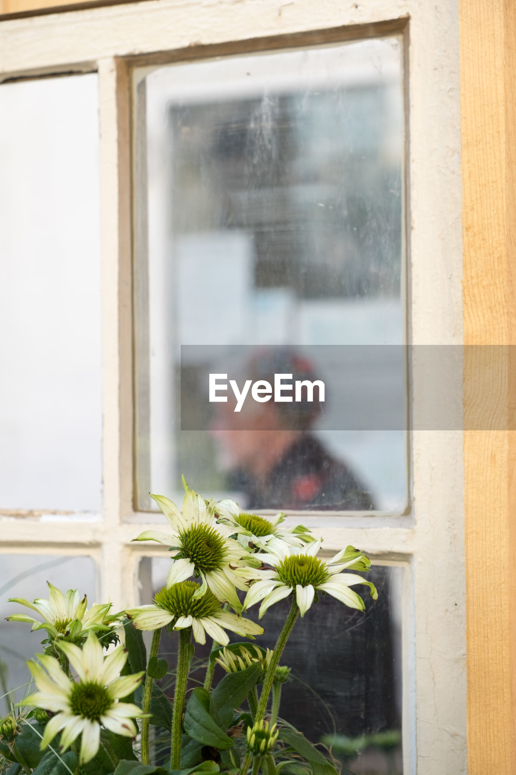 Close-up of man looking through window