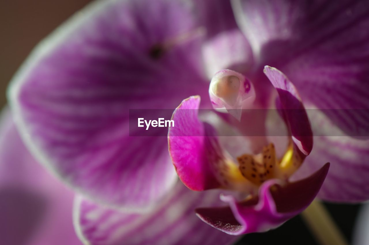flower, petal, fragility, beauty in nature, nature, flower head, growth, freshness, purple, close-up, no people, pollen, stamen, blooming, plant, day, outdoors