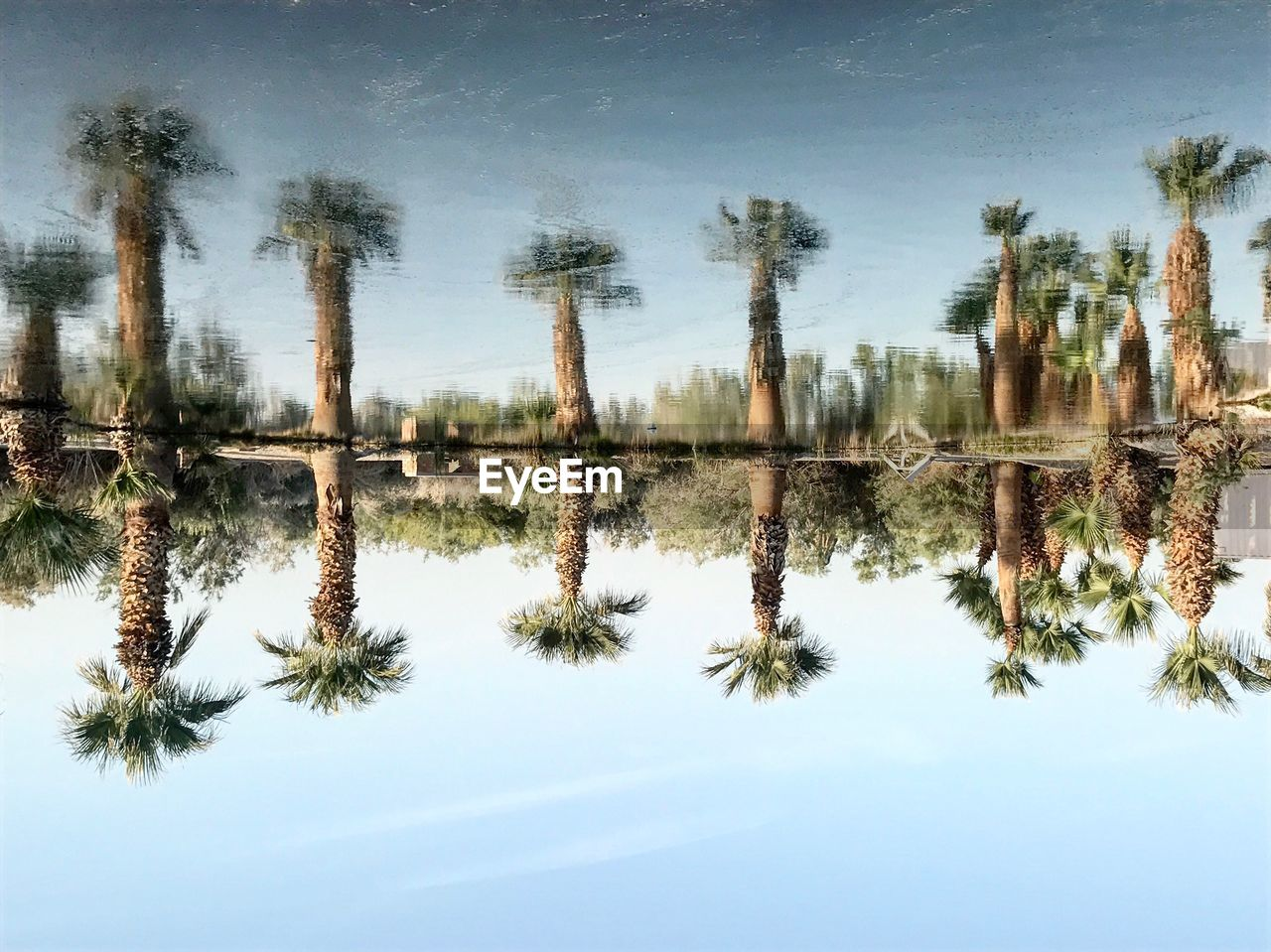 no people, tranquility, reflection, nature, tree, growth, day, sky, water, tranquil scene, outdoors, beauty in nature, scenics, plant, palm tree, close-up