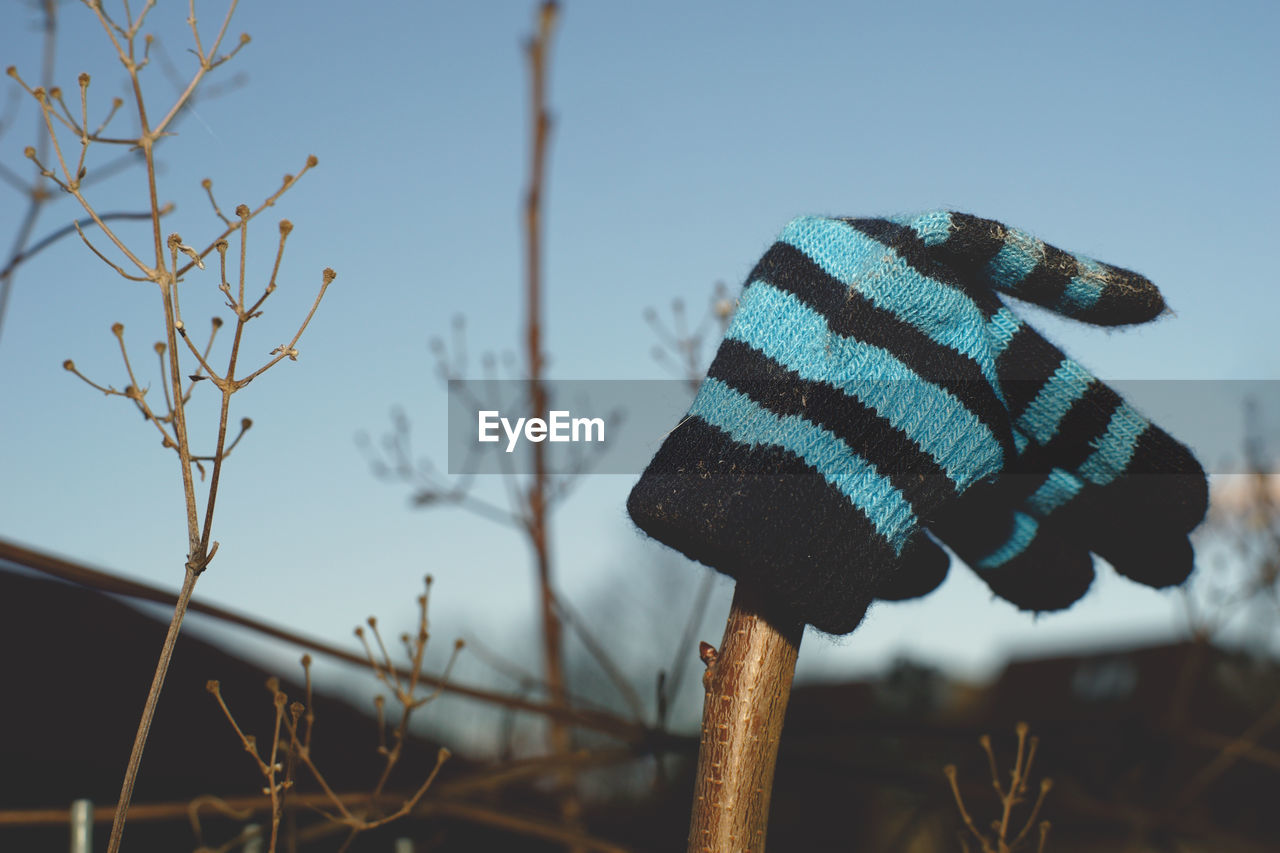 focus on foreground, sky, close-up, no people, nature, plant, day, tree, outdoors, striped, clear sky, winter, cold temperature, bare tree, blue, growth, low angle view, selective focus, pattern, clothing