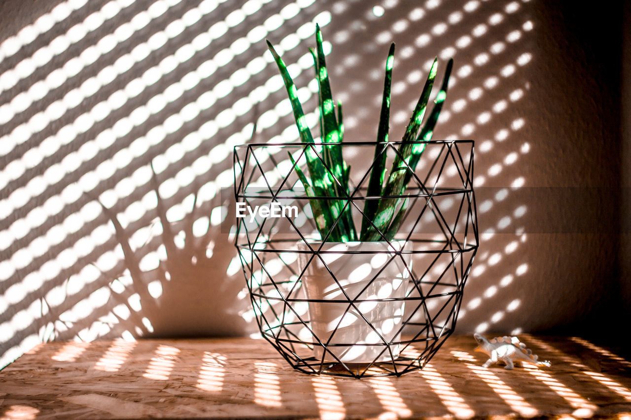 Sunlight falling on potted aloe vera plant at home