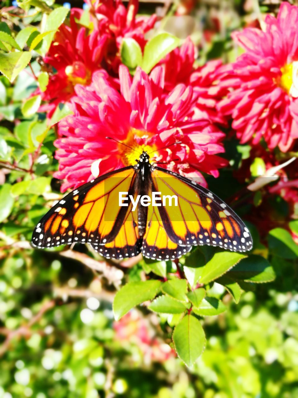 flower, animals in the wild, nature, insect, growth, animal themes, freshness, beauty in nature, butterfly - insect, fragility, one animal, no people, petal, plant, day, flower head, outdoors, close-up, pollination
